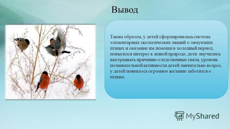 Вывод Таким образом, у детей сформировалась система элементарных экологических знаний о зимующих птицах и оказание им помощи в холодный период, повысился интерес к живой природе, дети научились выстраивать причинно-следственные связи, уровень познава