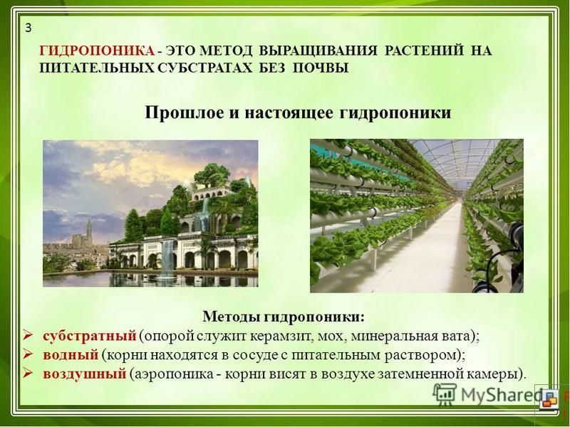 Выращивание без почвы 27
