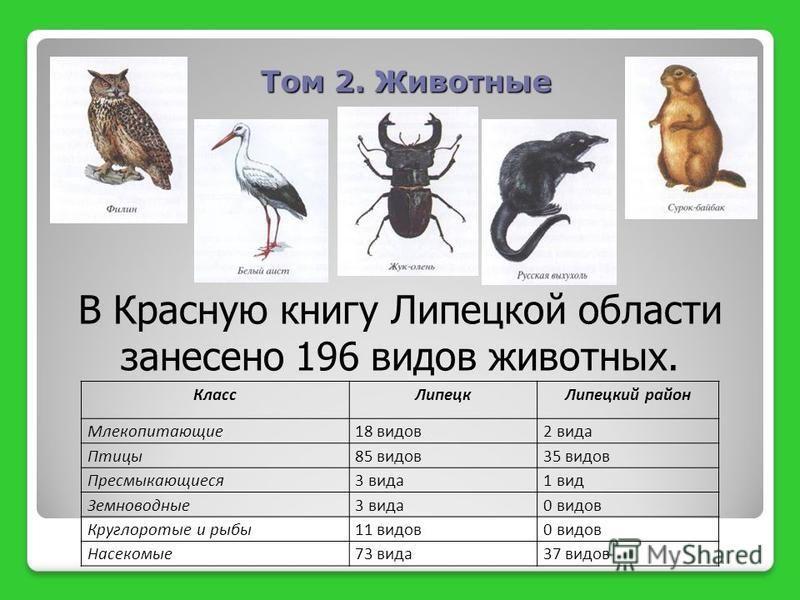 Том 2. Животные Класс ЛипецкЛипецкий район Млекопитающие 18 видов 2 вида Птицы 85 видов 35 видов Пресмыкающиеся 3 вида 1 вид Земноводные 3 вида 0 видов Круглоротые и рыбы 11 видов 0 видов Насекомые 73 вида 37 видов В Красную книгу Липецкой области за