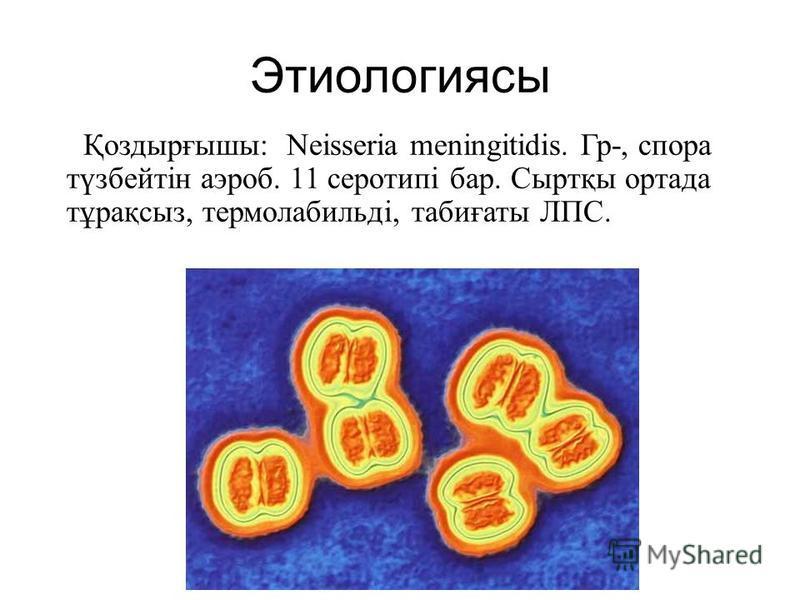 Этиологиясы Қоздырғышы: Neisseria meningitidis. Гр-, спора түзбейтін аэроб. 11 серотипі бар. Сыртқы отрада тұрақсыз, термолабильді, табиғаты ЛПС.