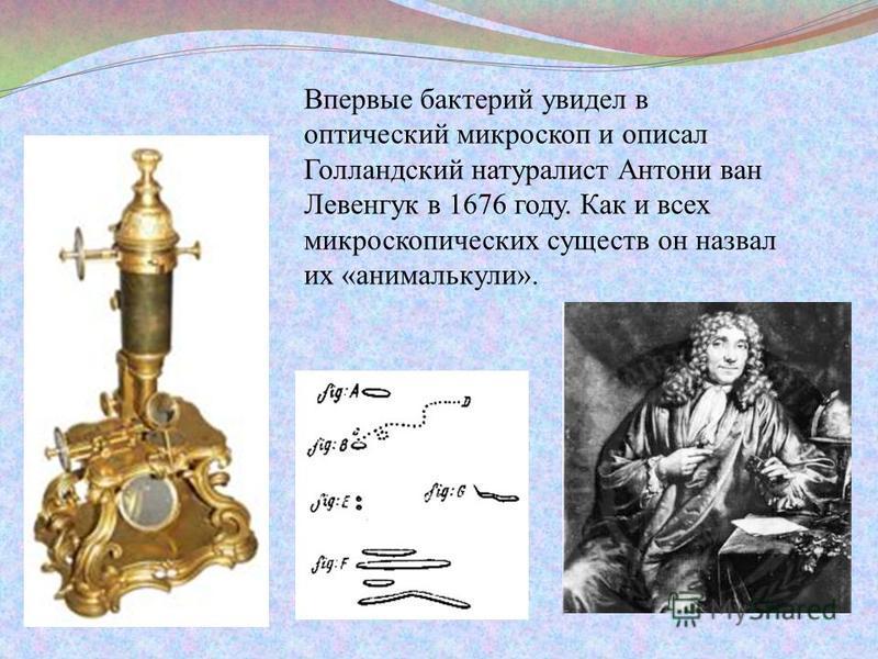 Впервые бактерий увидел в оптический микроскоп и описал Голландский натуралист Антони ван Левенгук в 1676 году. Как и всех микроскопических существ он назвал их «анималькули».
