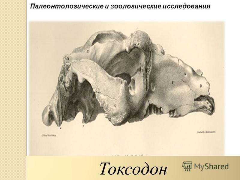 Палеонтологические и зоологические исследования Токсодон
