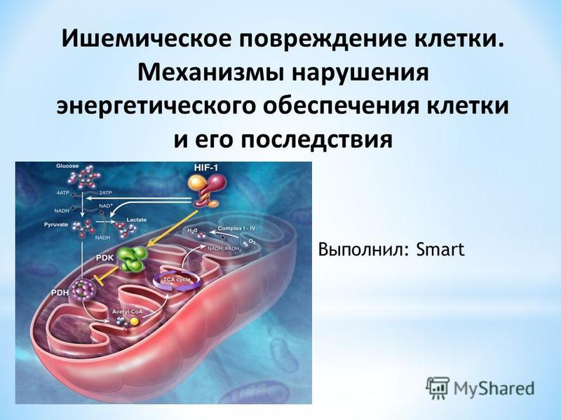 Ишемическое повреждение клетки. Механизмы нарушения энергетического обеспечения клетки и его последствия Выполнил: Smart