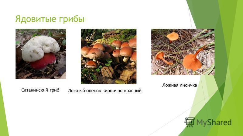 Ядовитые грибы Сатанинский гриб Ложный опенок кирпично-красный Ложная лисичка