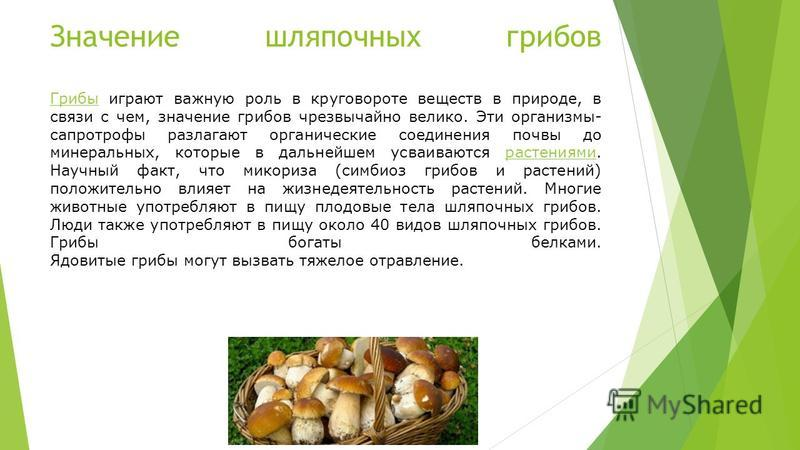 Значение шляпочных грибов Грибы играют важную роль в круговороте веществ в природе, в связи с чем, значение грибов чрезвычайно велико. Эти организмы- сапротрофы разлагают органические соединения почвы до минеральных, которые в дальнейшем усваиваются