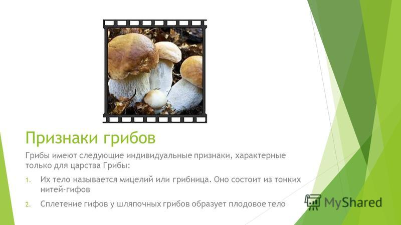 Признаки грибов Грибы имеют следующие индивидуальные признаки, характерные только для царства Грибы: 1. Их тело называется мицелий или грибница. Оно состоит из тонких нитей-гифов 2. Сплетение гифов у шляпочных грибов образует плодовое тело