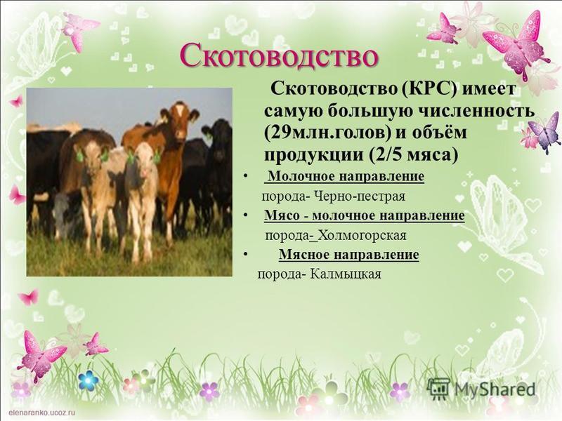 Скотоводство (КРС) имеет самую большую численность (29 млн.голов) и объём продукции (2/5 мяса) Молочное направление порода- Черно-пестрая Мясо - молочное направление порода- Холмогорская Мясное направление порода- Калмыцкая Скотоводство