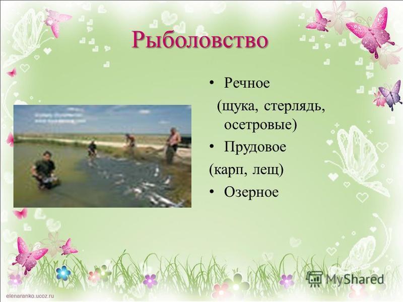 Речное (щука, стерлядь, осетровые) Прудовое (карп, лещ) Озерное Рыболовство