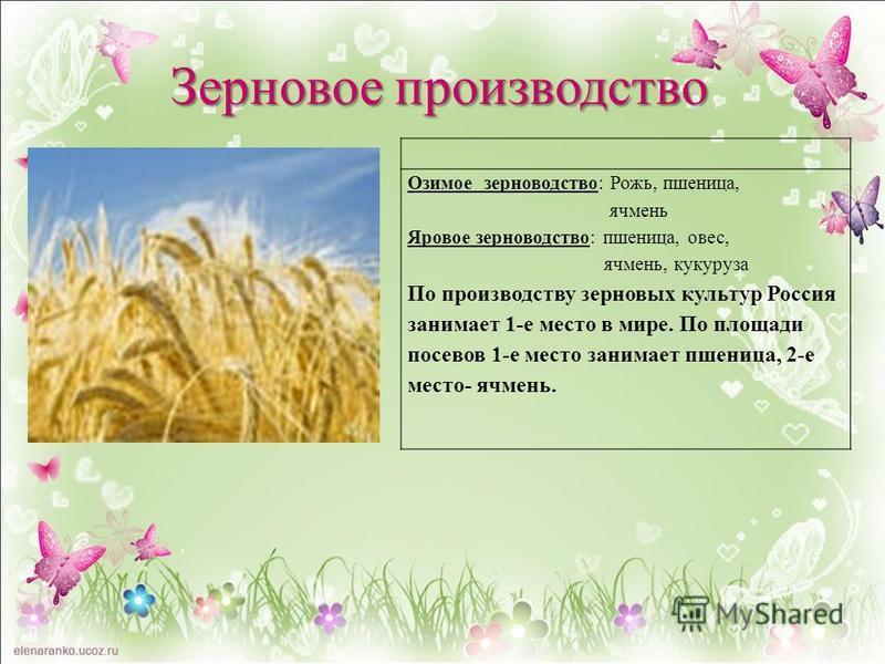 Озимое зерноводство: Рожь, пшеница, ячмень Яровое зерноводство: пшеница, овес, ячмень, кукуруза По производству зерновых культур Россия занимает 1-е место в мире. По площади посевов 1-е место занимает пшеница, 2-е место- ячмень. Зерновое производство