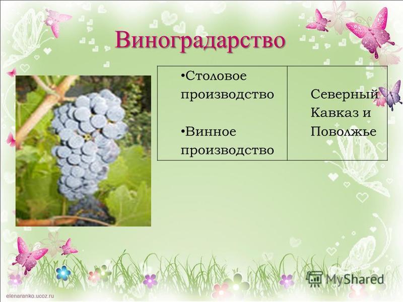 Столовое производство Винное производство Северный Кавказ и Поволжье Виноградарство