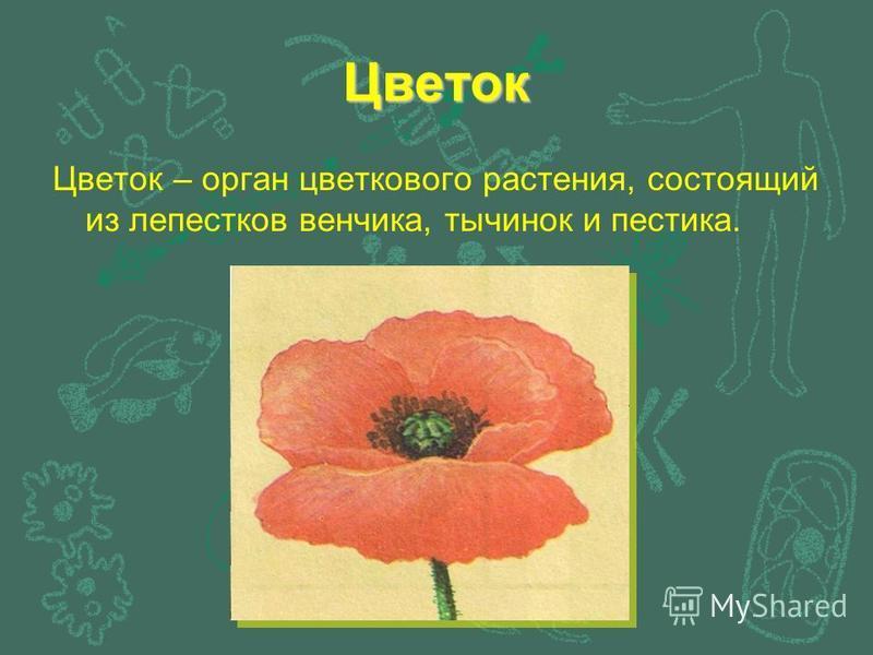 Цветок Цветок – орган цветкового растения, состоящий из лепестков венчика, тычинок и пестика.