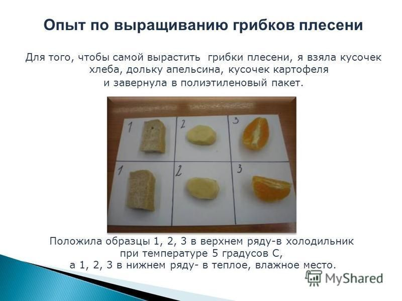 Опыт по выращиванию грибков плесени Для того, чтобы самой вырастить грибки плесени, я взяла кусочек хлеба, дольку апельсина, кусочек картофеля и завернула в полиэтиленовый пакет. Положила образцы 1, 2, 3 в верхнем ряду-в холодильник при температуре 5