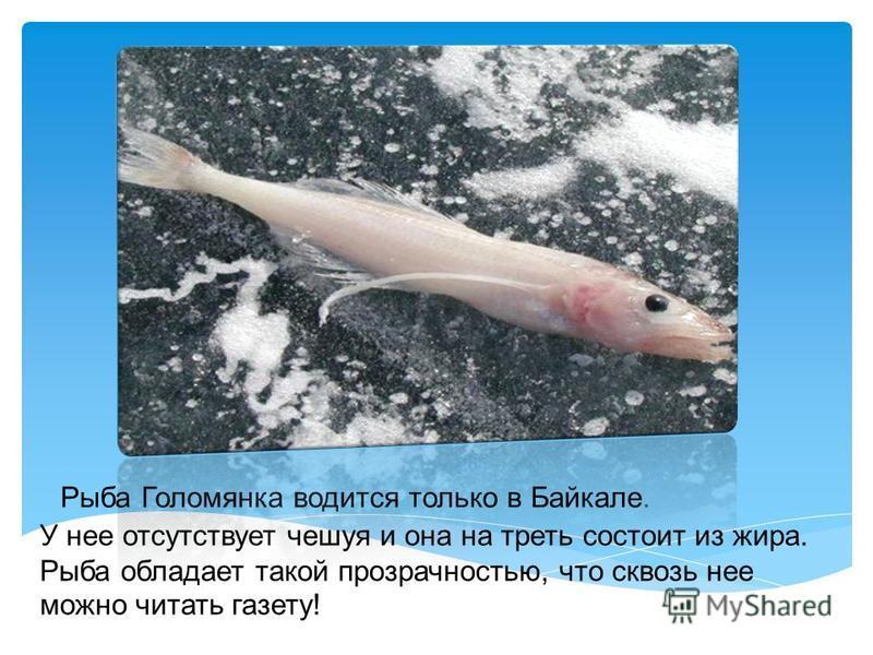 В озеро впадает 336 рек.И только единственная река Ангара берет свое начало с Байкала.