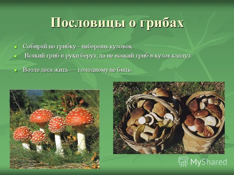 Пословицы о грибах Собирай по грибку - наберешь кузовок. Собирай по грибку - наберешь кузовок. Всякий гриб в руки берут, да не всякий гриб в кузов кладут. Всякий гриб в руки берут, да не всякий гриб в кузов кладут. Возле леса жить голодному не быть.