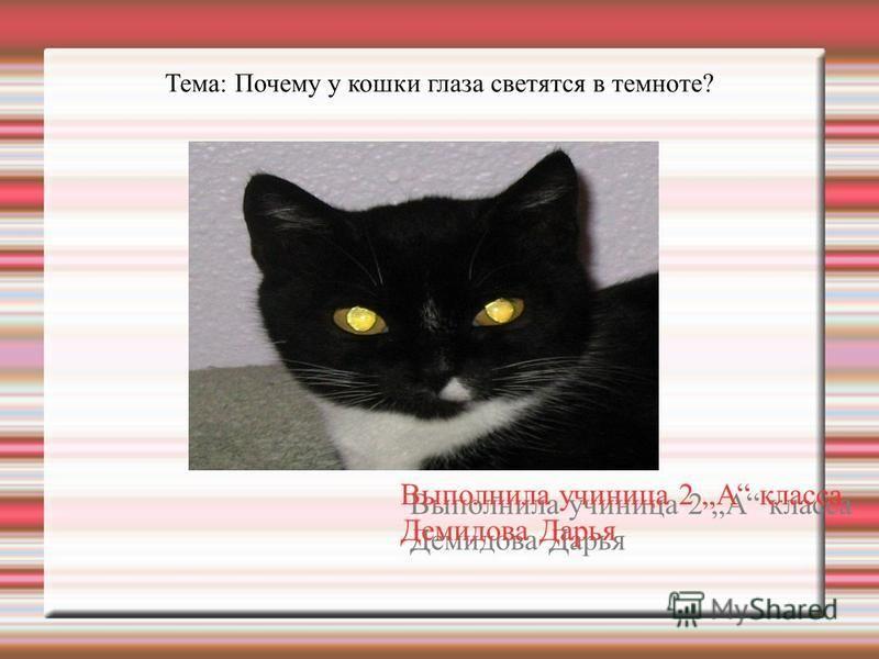 Тема: Почему у кошки глаза светятся в темноте? Выполнила ученица 2 А класса Демидова Дарья Выполнила ученица 2 А класса Демидова Дарья