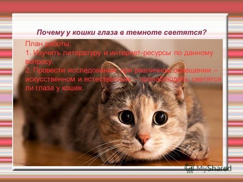 Почему у кошки глаза в темноте светятся? План работы: 1. Изучить литературу и интернет-ресурсы по данному вопросу. 2. Провести исследования: при различном освещении – искусственном и естественном – пронаблюдать светятся ли глаза у кошек.