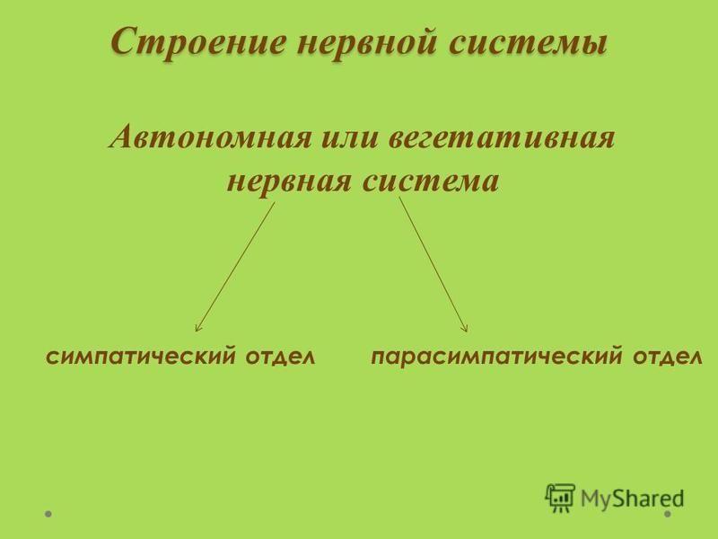 Строение нервной системы Автономная или вегетативная нервная система симпатический отдел парасимпатический отдел