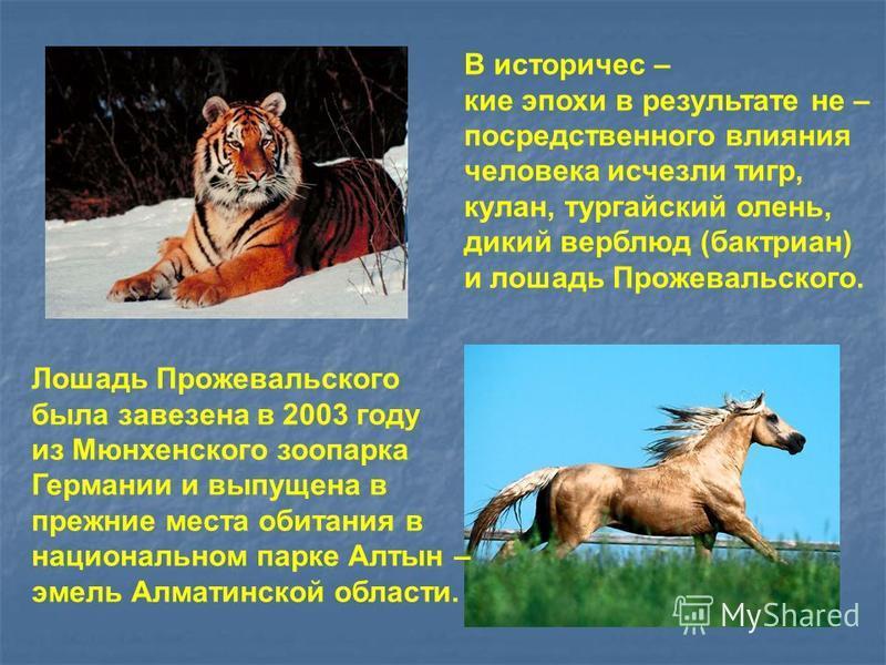 В исторические эпохи в результате не – посредственного влияния человека исчезли тигр, кулан, тургайский олень, дикий верблюд (бактриан) и лошадь Прожевальского. Лошадь Прожевальского была завезена в 2003 году из Мюнхенского зоопарка Германии и выпуще