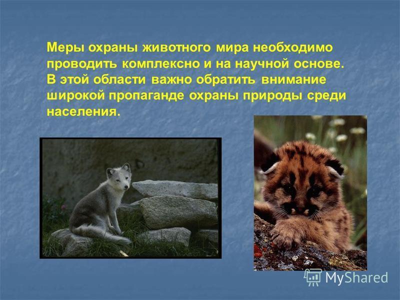 Меры охраны животного мира необходимо проводить комплексно и на научной основе. В этой области важно обратить внимание широкой пропаганде охраны природы среди населения.