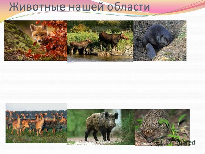 Животные нашей области