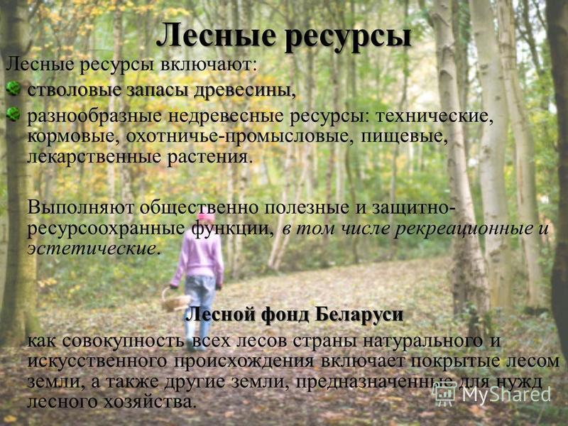 Доклад на тему лесные богатства 4652