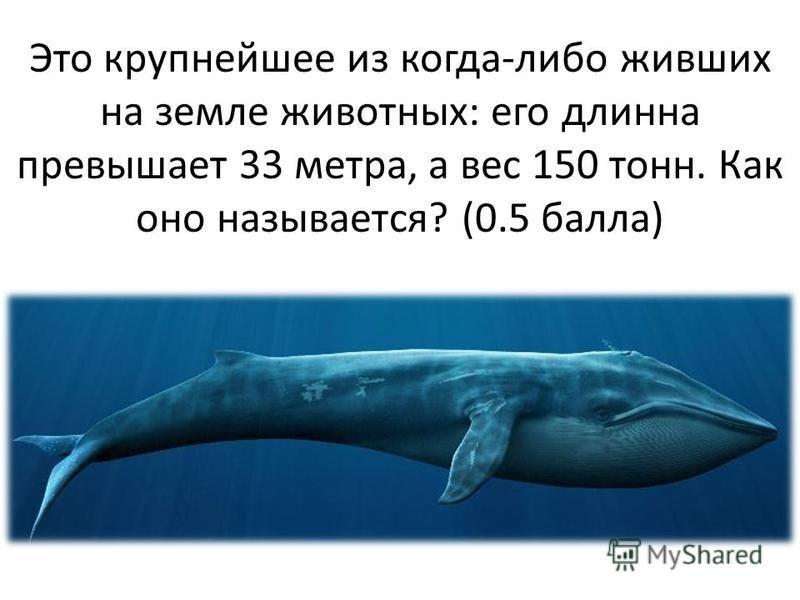 Это крупнейшее из когда-либо живших на земле животных: его длинна превышает 33 метра, а вес 150 тонн. Как оно называется? (0.5 балла)