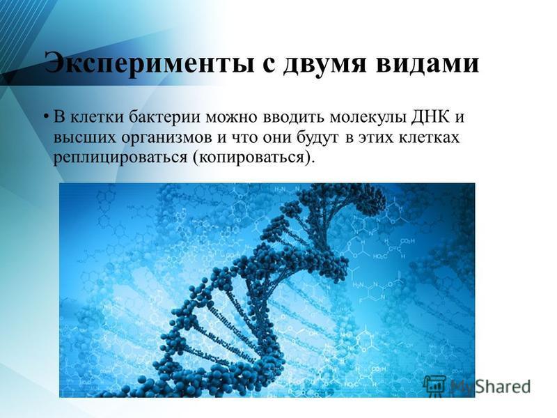 Эксперименты с двумя видами В клетки бактерии можно вводить молекулы ДНК и высших организмов и что они будут в этих клетках реплицироваться (копироваться).