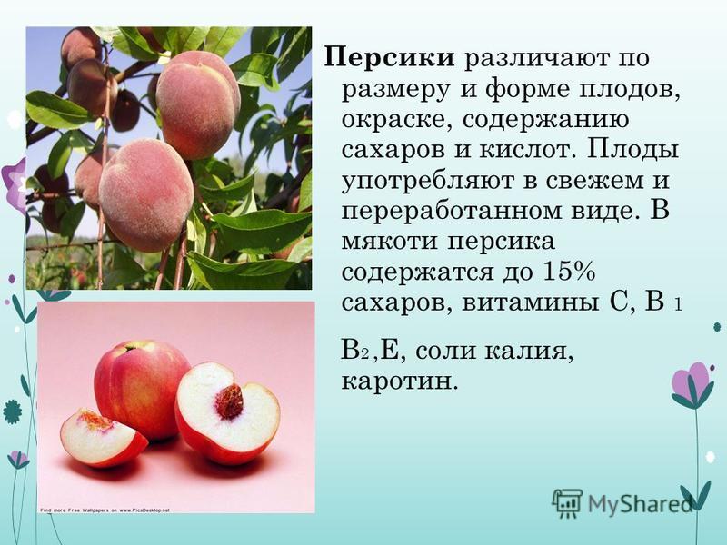Персики различают по размеру и форме плодов, окраске, содержанию сахаров и кислот. Плоды употребляют в свежем и переработанном виде. В мякоти персика содержатся до 15% сахаров, витамины С, В 1 В 2, Е, соли калия, каротин.