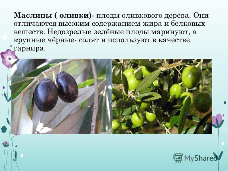 Маслины ( оливки)- плоды оливкового дерева. Они отличаются высоким содержанием жира и белковых веществ. Недозрелые зелёные плоды маринуют, а крупные чёрные- солят и используют в качестве гарнира.