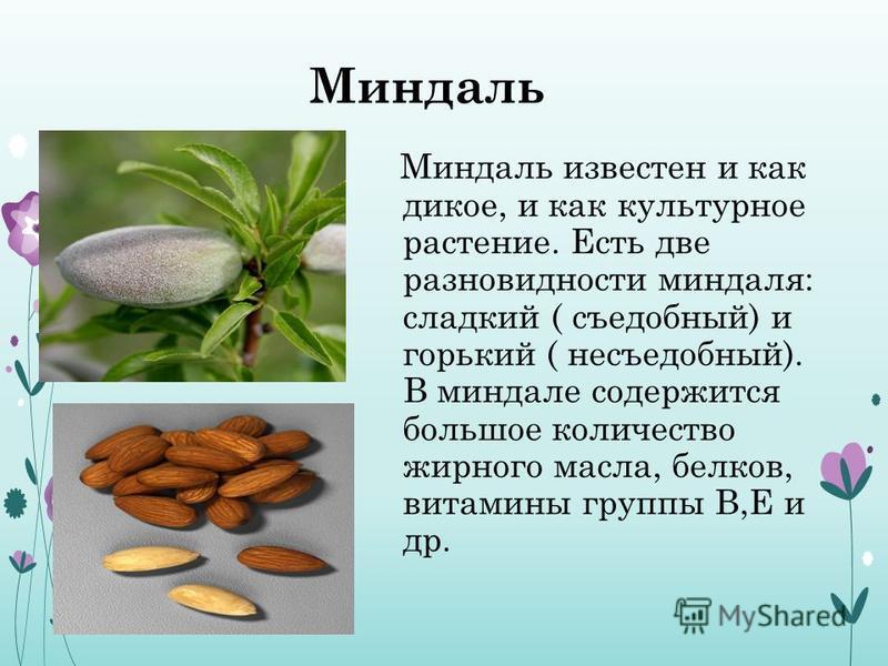 Миндаль Миндаль известен и как дикое, и как культурное растение. Есть две разновидности миндаля: сладкий ( съедобный) и горький ( несъедобный). В миндале содержится большое количество жирного масла, белков, витамины группы В,Е и др.
