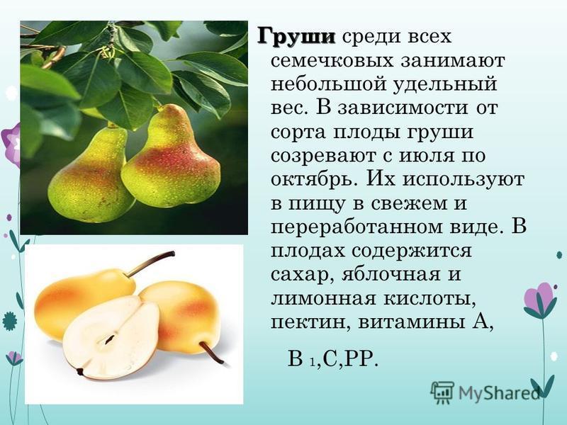 Груши Груши среди всех семечковых занимают небольшой удельный вес. В зависимости от сорта плоды груши созревают с июля по октябрь. Их используют в пищу в свежем и переработанном виде. В плодах содержится сахар, яблочная и лимонная кислоты, пектин, ви