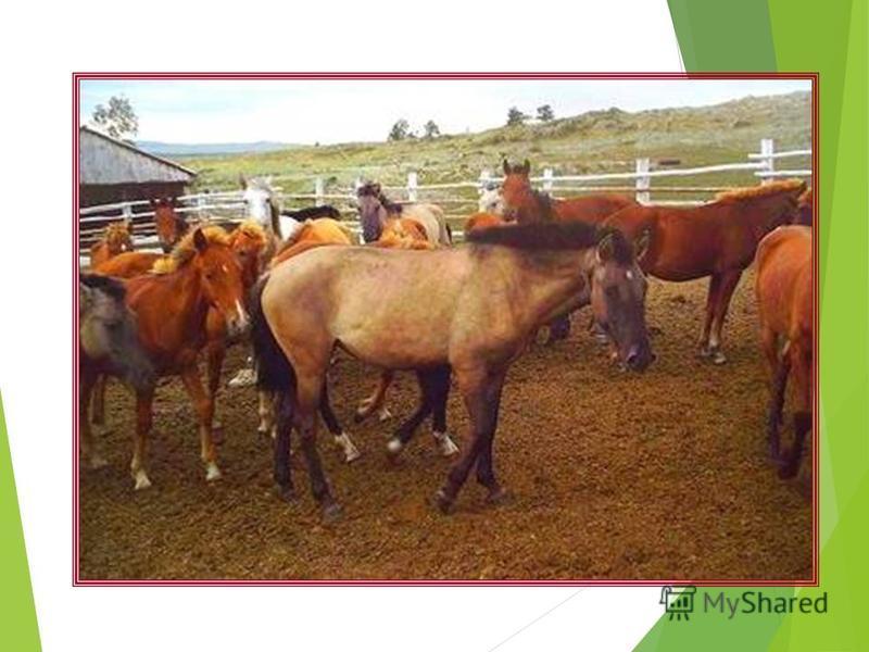 Коневодство Люди вывели много пород лошадей. Породистых лошадей разводят на конных заводах. Лесникам Пастухам Пограничникам Конным спортом Конным туризмом Перевозят грузы в сёлах
