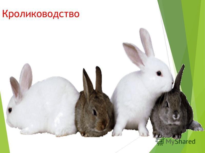 Кролиководство Содержат кроликов на фермах. Разводят ради тёплого, красивого меха, пуха и вкусного, питательного мяса. Выведено более 60 пород.
