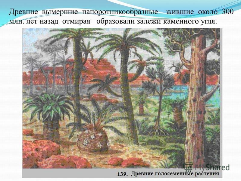 Древние вымершие папоротникообразные жившие около 300 млн. лет назад отмирая образовали залежи каменного угля.