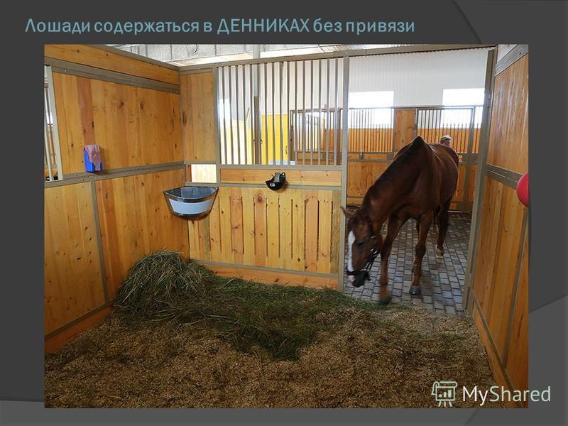 Денники для лошадей своими руками видео