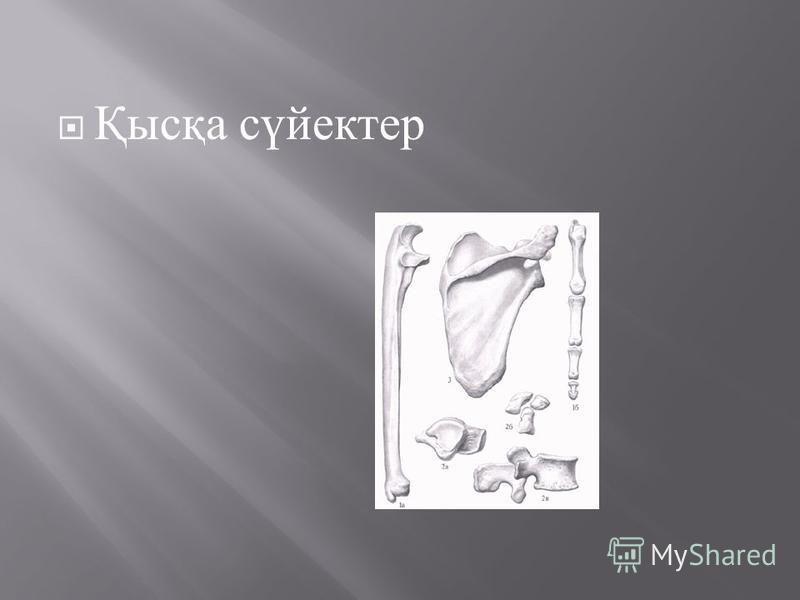 Қысқа сүйектер