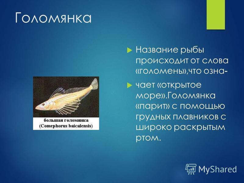 Голомянка Название рыбы происходит от слова «голомень»,что означает «открытое море».Голомянка «парит» с помощью грудных плавников с широко раскрытым ртом.