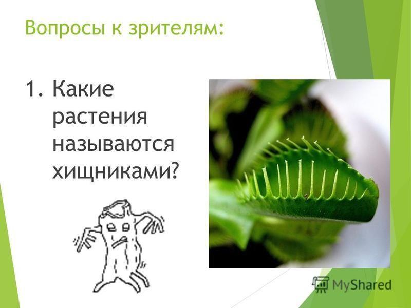 Вопросы к зрителям: 1. Какие растения называются хищниками?