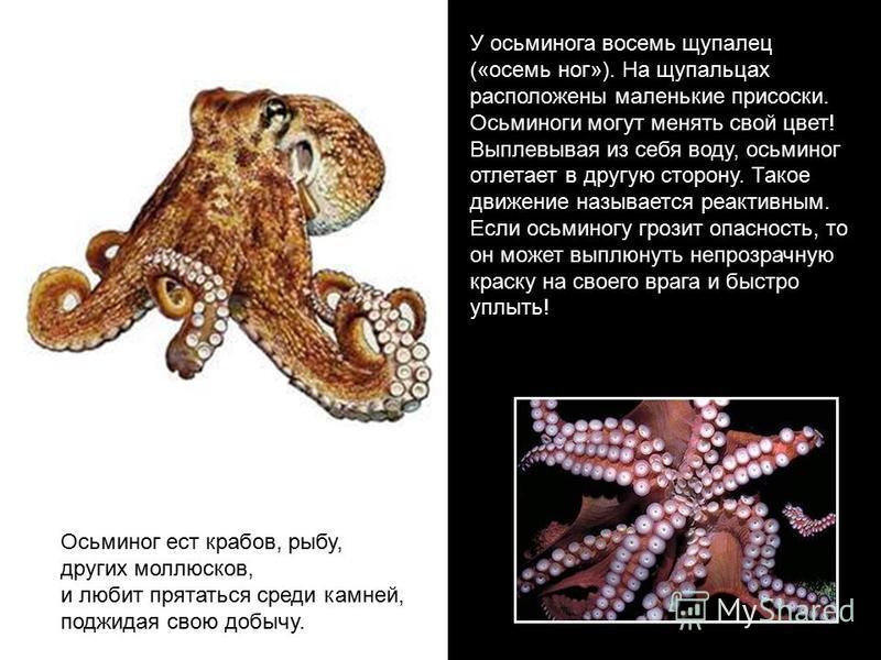 У осьминога ввосемь щупалец («восемь ног»). На щупальцах расположены маленькие присоски. Осьминоги могут менять свой цвет! Выплевывая из себя воду, осьминог отлетает в другую сторону. Такое движение называется реактивным. Если осьминогу грозит опасно