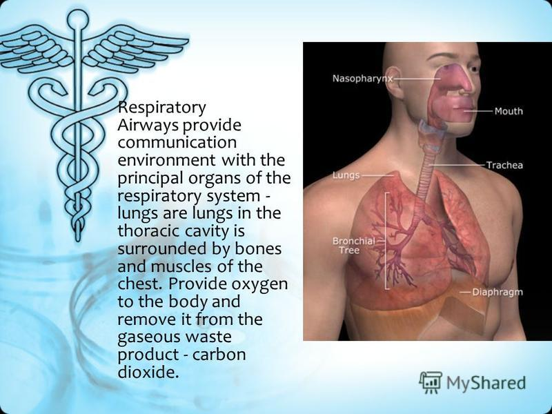 The Human Respiratory System A Set Of Bodies