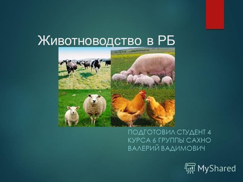 Животноводство в РБ ПОДГОТОВИЛ СТУДЕНТ 4 КУРСА 6 ГРУППЫ САХНО ВАЛЕРИЙ ВАДИМОВИЧ