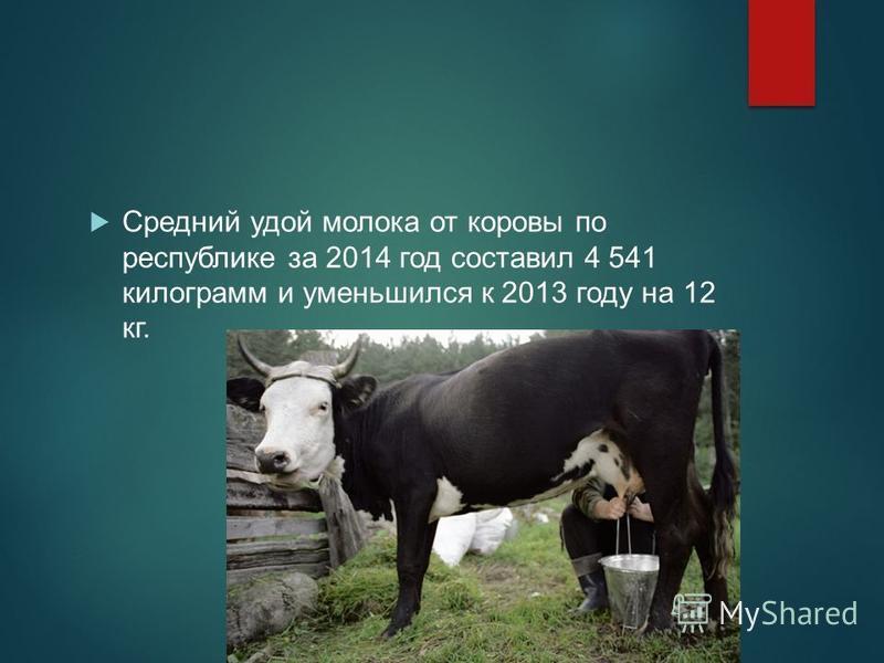 Средний удой молока от коровы по республике за 2014 год составил 4 541 килограмм и уменьшился к 2013 году на 12 кг.