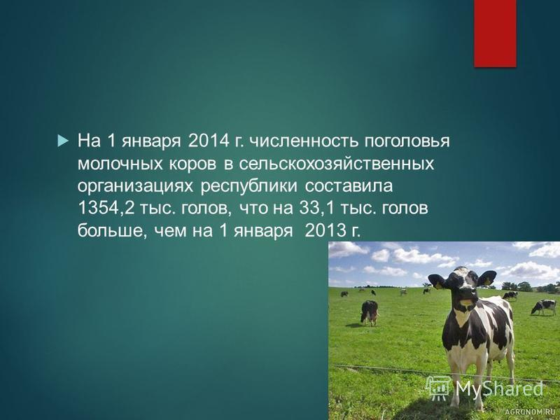 На 1 января 2014 г. численность поголовья молочных коров в сельскохозяйственных организациях республики составила 1354,2 тыс. голов, что на 33,1 тыс. голов больше, чем на 1 января 2013 г.