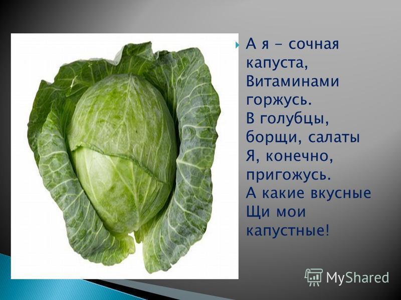 А я - сочная капуста, Витаминами горжусь. В голубцы, борщи, салаты Я, конечно, пригожусь. А какие вкусные Щи мои капустные!