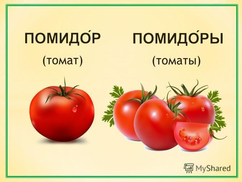 (томат) (томаты)