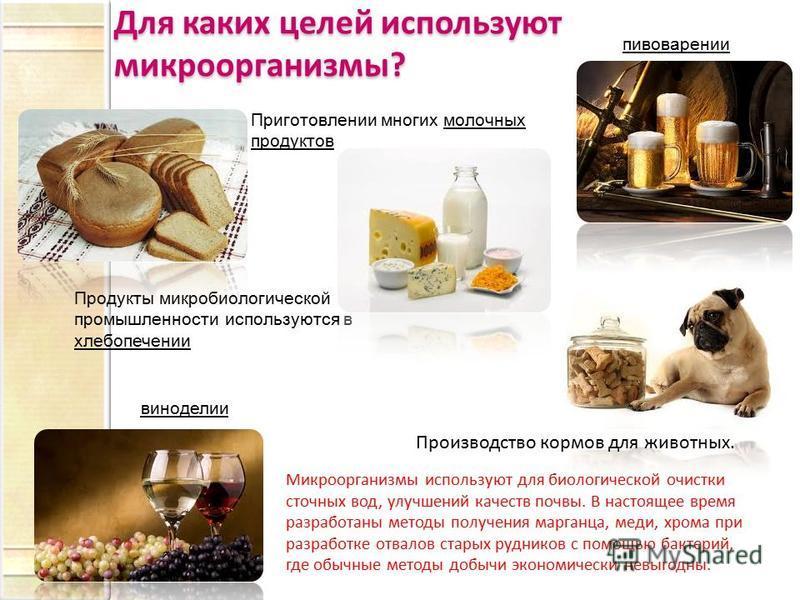 Продукты микробиологической промышленности используются в хлебопечении пивоварении виноделии Приготовлении многих молочных продуктов Микроорганизмы используют для биологической очистки сточных вод, улучшений качеств почвы. В настоящее время разработа