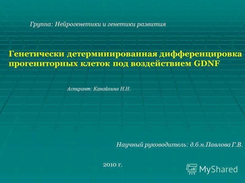 Генетически детерминированная дифференцировка прогениторных клеток под воздействием GDNF Группа: Нейрогенетики и генетики развития Научный руководитель: д.б.н.Павлова Г.В. 2010 г. Аспирант: Канайкина Н.Н.
