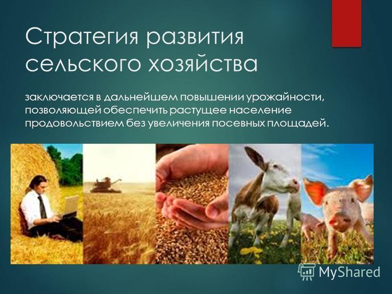 Стратегия развития сельского хозяйства заключается в дальнейшем повышении урожайности, позволяющей обеспечить растущее население продовольствием без увеличения посевных площадей.