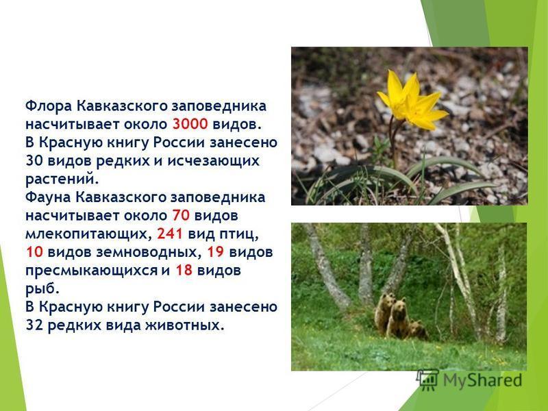 Флора Кавказского заповедника насчитывает около 3000 видов. В Красную книгу России занесено 30 видов редких и исчезающих растений. Фауна Кавказского заповедника насчитывает около 70 видов млекопитающих, 241 вид птиц, 10 видов земноводных, 19 видов пр