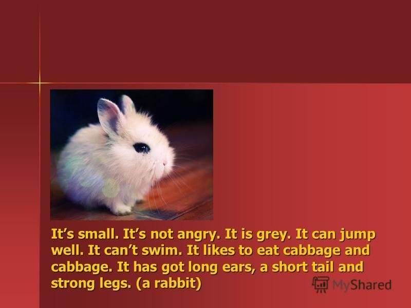 Its small. Its not angry. It is grey. It can jump well. It cant swim. It likes to eat cabbage and cabbage. It has got long ears, a short tail and strong legs. (a rabbit)